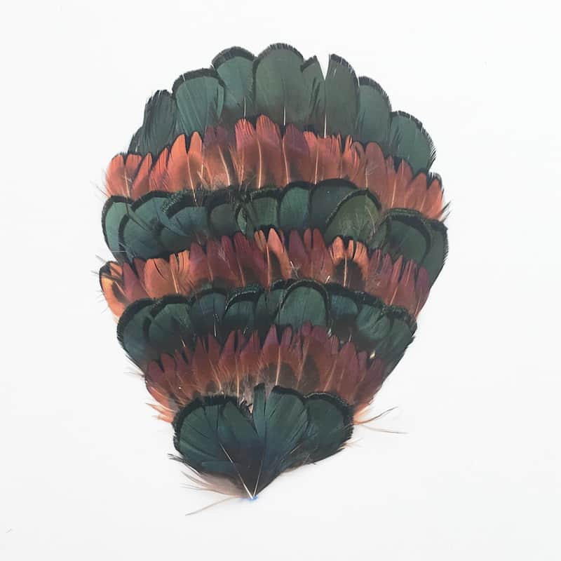 Lady Amherst Golden Pheasant Pad (Natural)