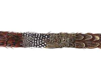 Guinea Pheasant Ringneck Trim