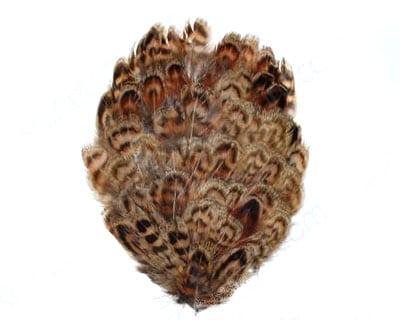 Female Ringneck Pheasant Pad