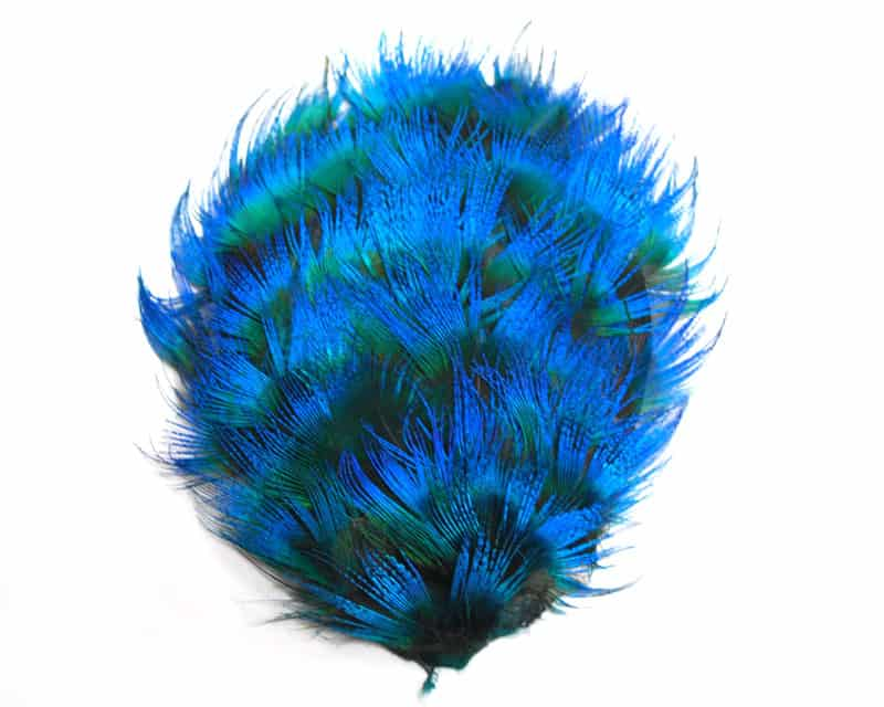 Blue Peacock Pad