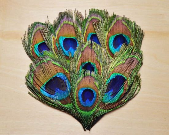 Peacock Eye Pad